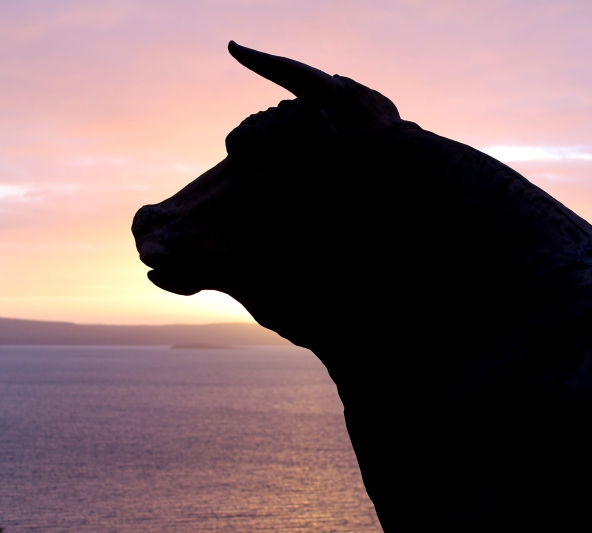 cow sunset crop