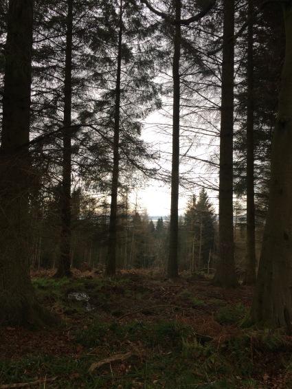 Urban forest around Callander House