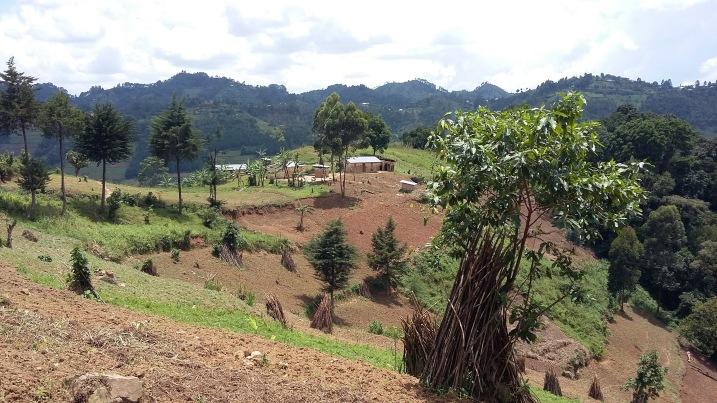 Farmlands on the walk in