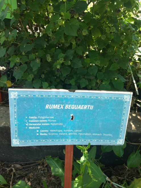 Interesting medicinal plants in the garden of the environment museum