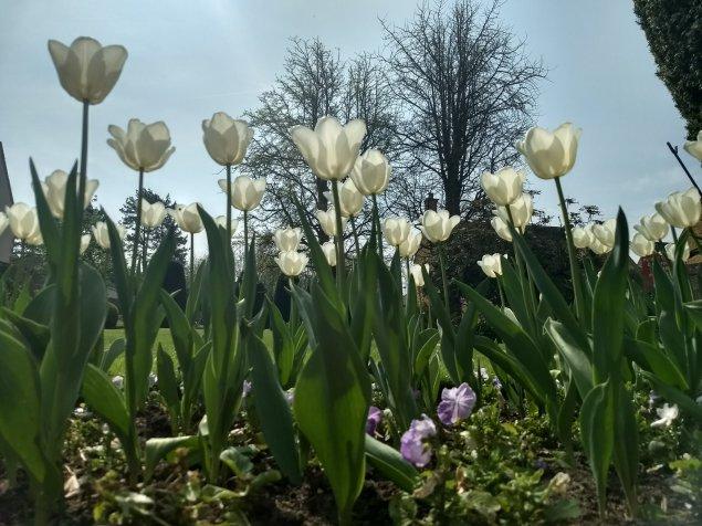 The joys of spring were abundent